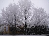 幻想的な雪景色