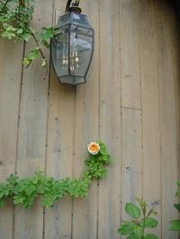 アルケミストの開花