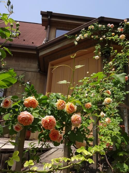 リガーデン バラ祭り1