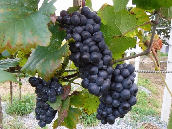 20170908_wine_1.JPG