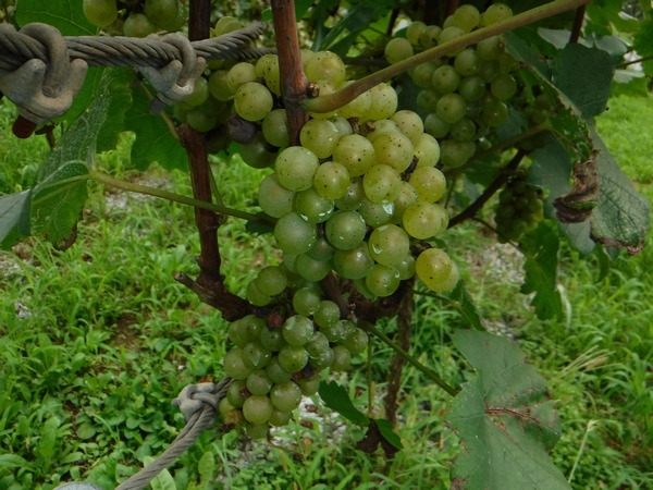 20170908_wine_2.JPG